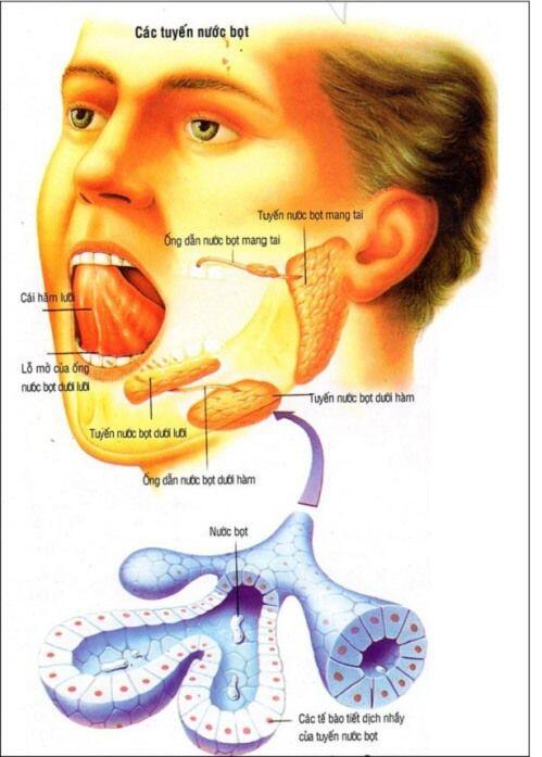 lợi ích của nước bọt với răng miệng