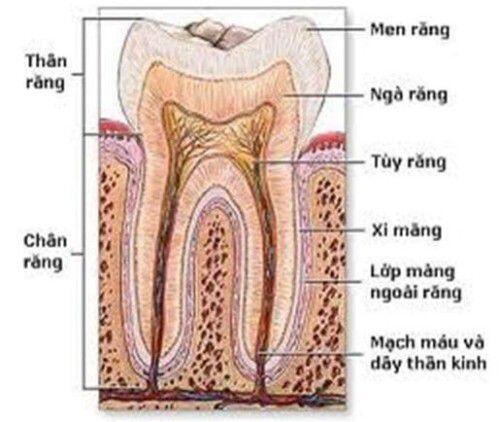 Bị đau và tê buốt chân răng là bệnh gì ?