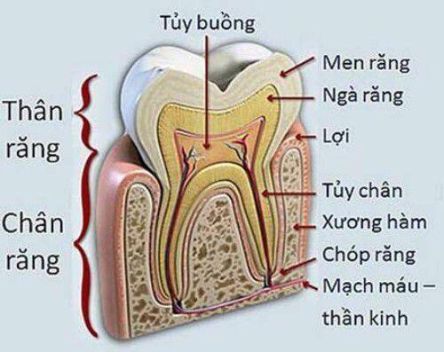 Diễn biến của bệnh viêm tủy răng